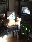 Sammy Soaking up more sun