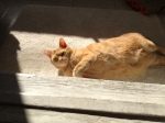 """Sammy """"baking a sunshine cake"""" in our new home."""
