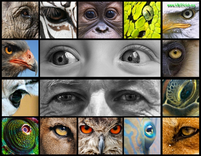 eyes collage animals vs. humnans-low res