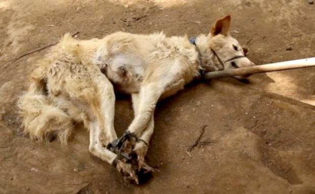 Bali, Indonesia: Dog MeatKebabs