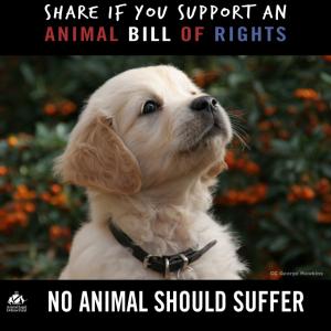 animal bill of rights